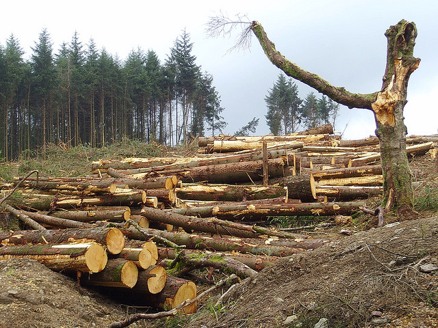 Deforestation and the internet of things